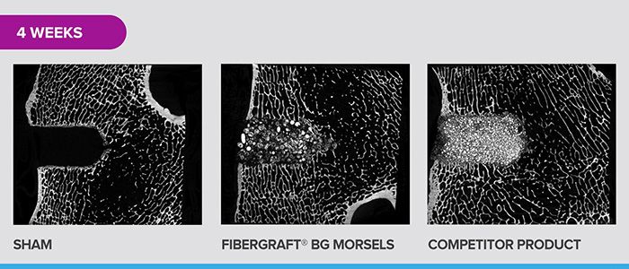 BGMorsels-MicroCT-4W